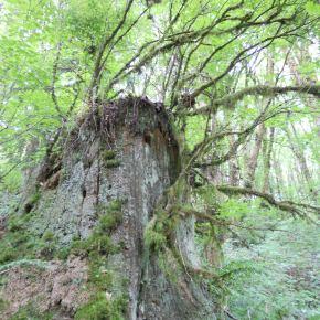 Wildwood Adventure: part1