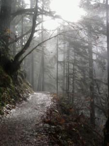 Eagle Creek trail. Columbia River Gorge, OR