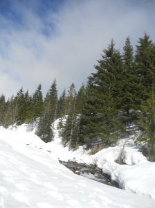Ski trail near Mt. St. Helens