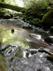 Balch Creek, Forest Park, Portland