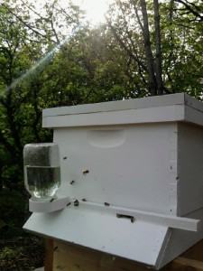 Our school beehive in SW Portland