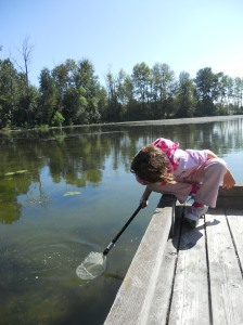 Dipping for pond creatures at Whitaker Pond