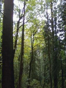 Marquam Nature Park. Portland, OR