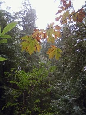 Fall, an annualmuse
