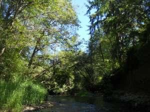 Cloquallum Creek between Elma and Shelton, Washington