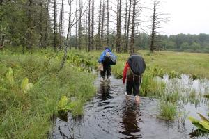 Point Bridget State Park, Alaska