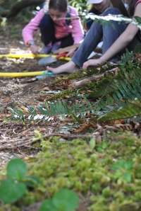 Students investigating forest transects in the ecosystem just above the Salmon River Estuary