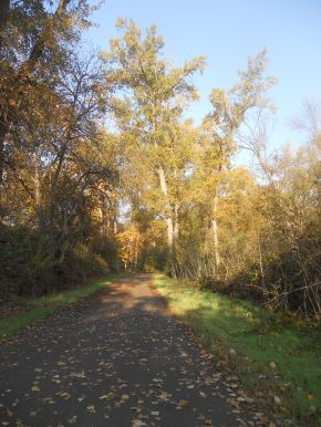Find Your Place: Musings from the Bear Creek Greenway — Hike and Go SEEC!